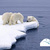 Polar Bears International's avatar